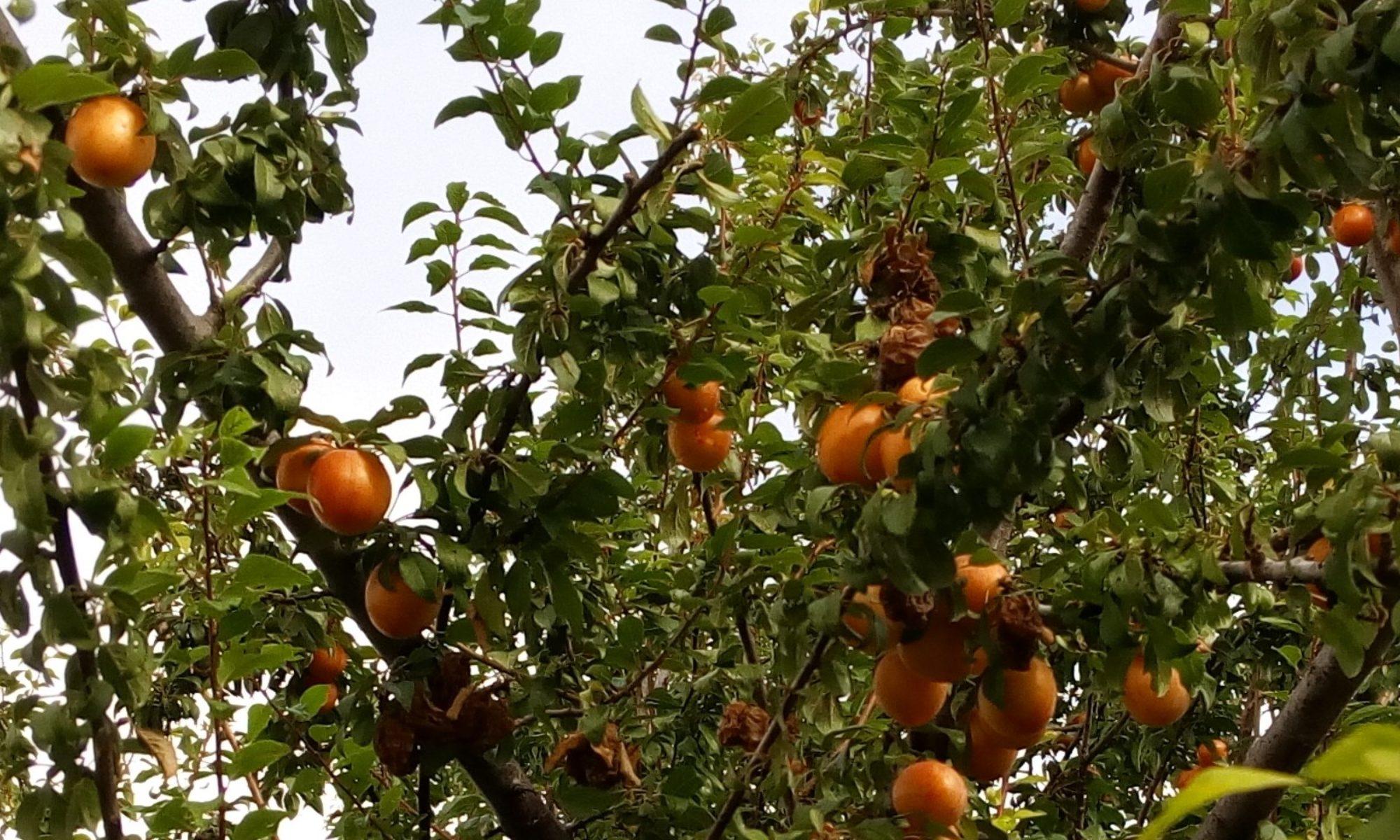 Variedades Tradicionales de Frutas
